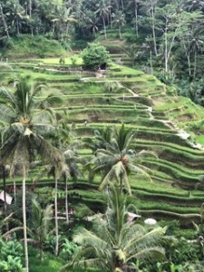 Shelina snaps Cegakin Rice Terraces
